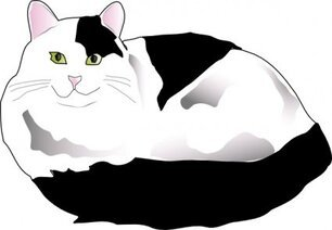 Missiridia Black And White Fluffy Cat