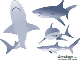 Gratis Vector Shark illustraties