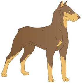 Doberman Vector 1