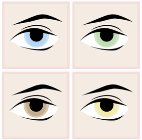 Eyes Vector Free Download