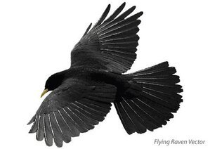 Flying Raven Free Vector Art