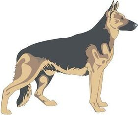 Dog vector collections 2