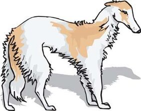 Beautiful Dog Vector 2
