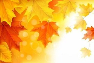 Autumn Maple Leaves Background Illustration