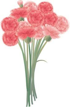Carnation Flower Gvozdika 7