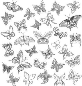 A Variety Of Butterflies