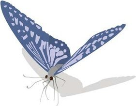 Butterfly Vector 13