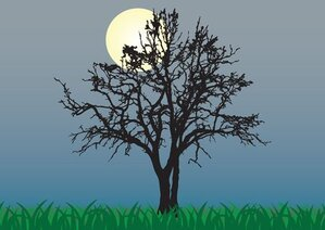 Moon & Tree Silhouette at Night Background (Free)