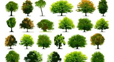 Collection of realistic trees
