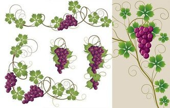 Purple grapes and grape leaf