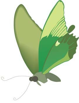 Butterfly Vector 23