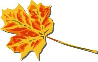 Fall Coloured Leaf