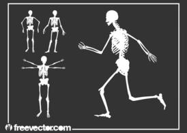 Skeletons Graphics