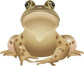 Frog 12