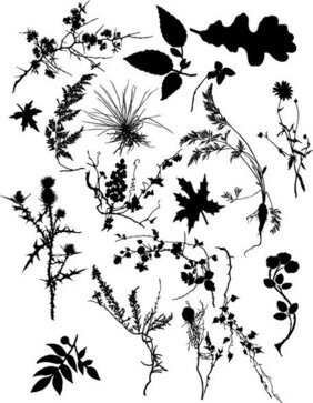 Plant Silhouettes Vector Set