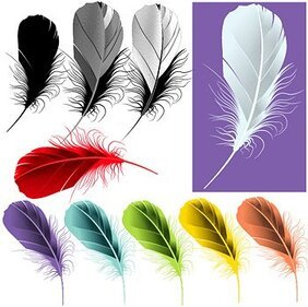 Plume couleur exquise