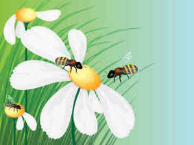 Honey bees flowers background