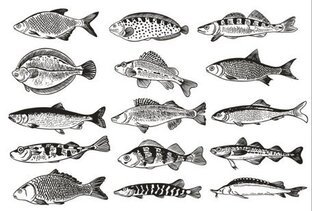 Color illustrations, Germany fish