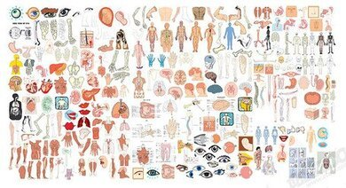 free human body organ clipart in ai svg eps or psd free human body organ clipart in ai
