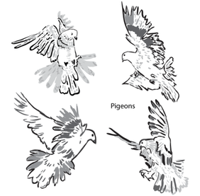 Artistic Pigeons Vector Pack