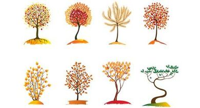 Compilation of Autumn Trees