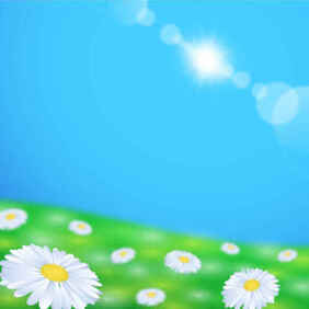 Daisy Flower Field Background