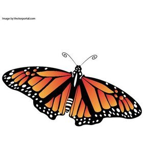 BUTTERFLY SIGN OF SPRING VECTOR.eps