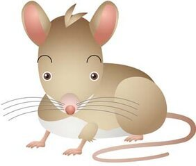 Mouse Vector 24