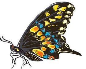 Butterfly Vector 11