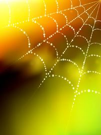 Glowing Spider Web Blurry Background with Droplet