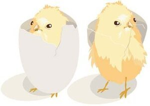 Little Chicken vector 14
