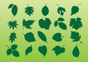 Plant Leaves Vectors