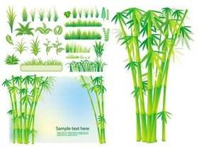 Bamboo grass plant