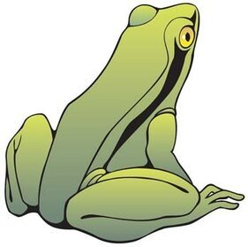 Frog 14