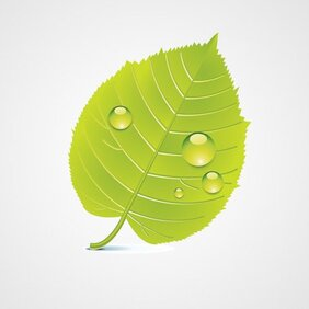 Green Leaf Vector Icon (Free)