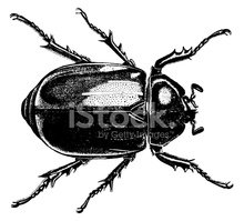 Engraving,Beetle,Engraved I...