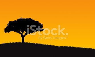 Tree,Silhouette,Sunset,Lone...