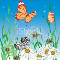 Butterfly - Insect,Flower,R...