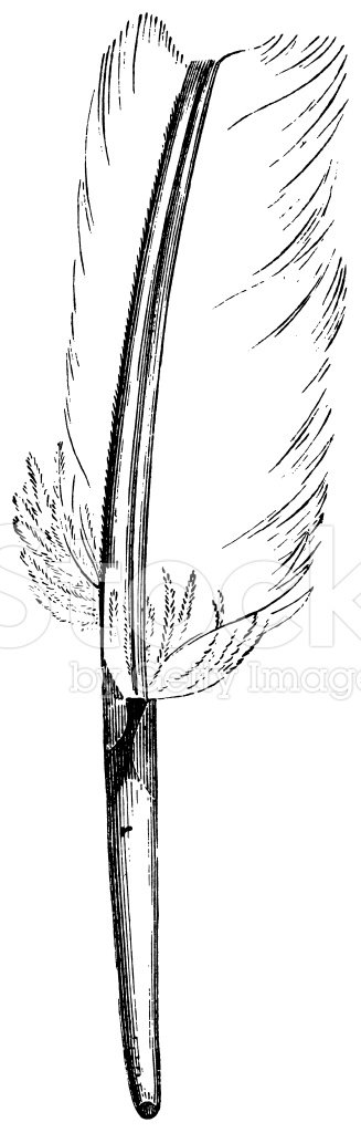 Feather,Engraved Image,Feat...