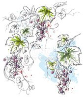 Grape,Vine,Winery,Watercolo...