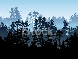 Forest,Tree,Silhouette,Pine...
