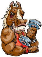 Horse,Body Building,Muscula...