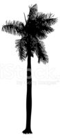 Silhouette,Palm Leaf,Tree,P...