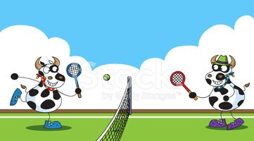 Tennis,Cow,Animal,Playing,S...