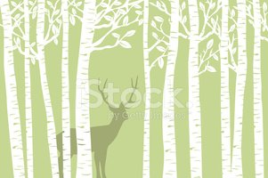 Forest,Birch Tree,Birch,Tre...