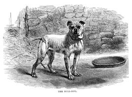 Dog,Bulldog,Engraved Image,...