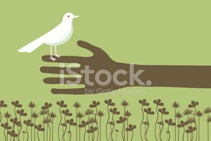 Dove - Bird,Human Hand,Afri...