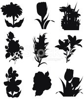 Flower,Silhouette,Lily,Vect...