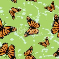Vector,Butterfly - Insect,C...