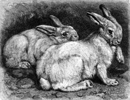 Engraving,Hare,Engraved Ima...